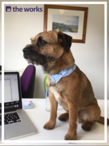 Take your dog to work this Friday!